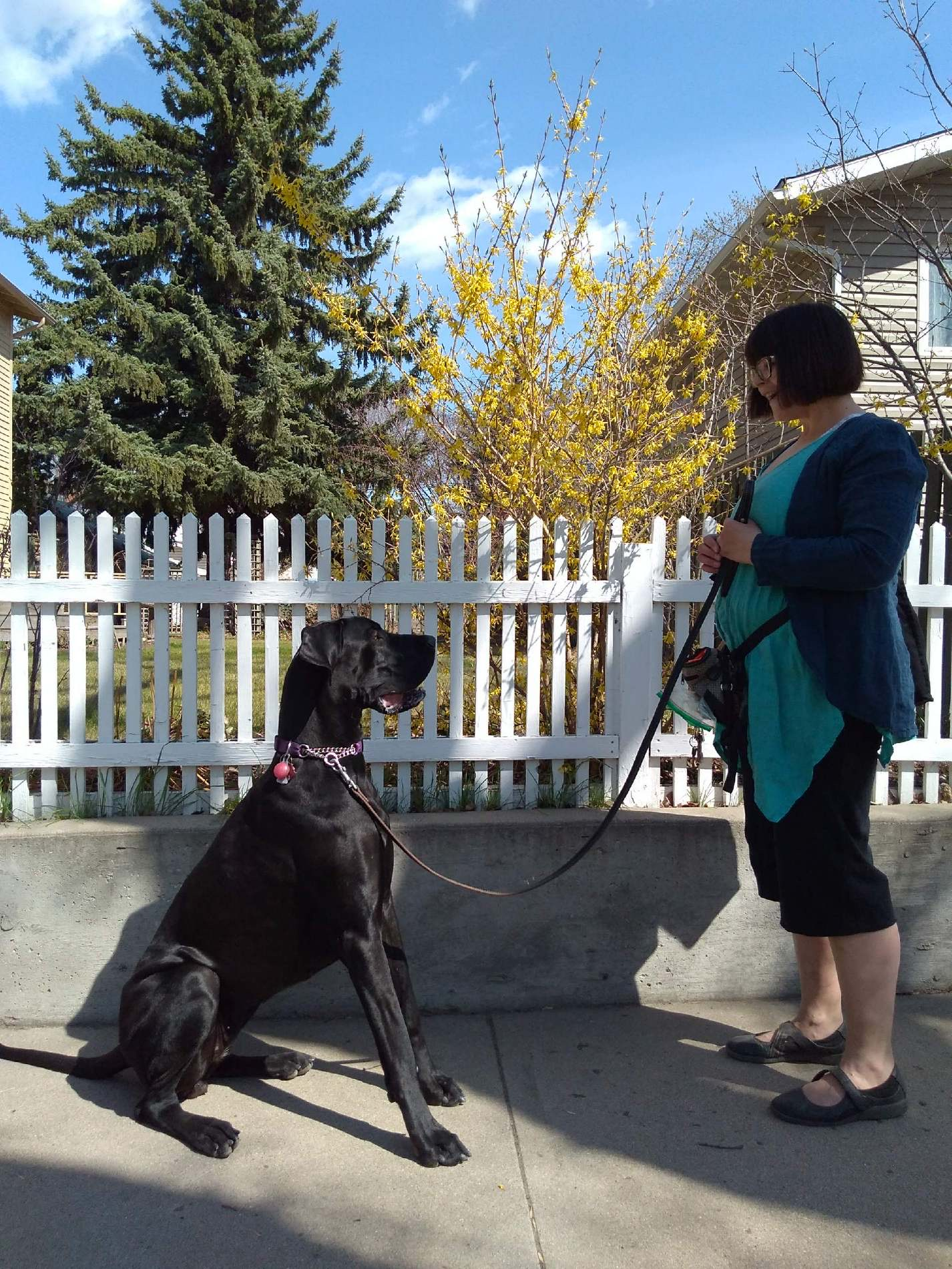 Holly McKenzie and Opal who is a black Great Dane and Therapy Dog in Training.